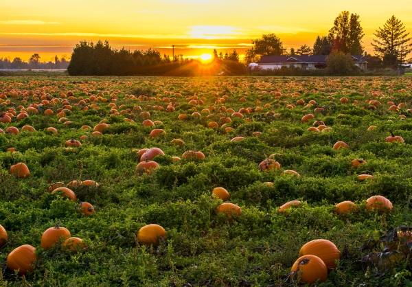 2018 Oregon Pumpkin Patches & Corn Mazes